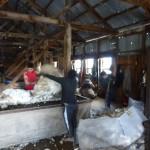 37 coupe de printemps pour les ovejas