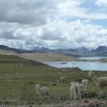 10- J13- km 29, la Laguna de Choclochalca avnt Santa Ines
