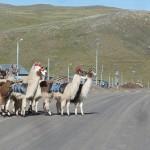 9- J13- km5 le village de Pilpichaca nous reserve son meilleur accueil